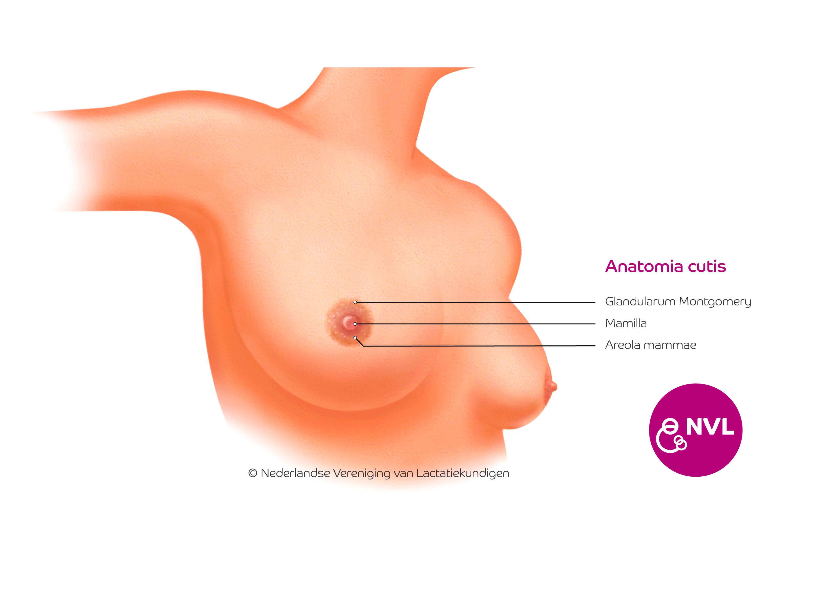 Anatomia Cutis | NVL